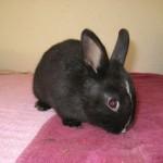 bunnies 064