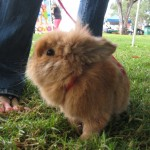 bunnyfest 025