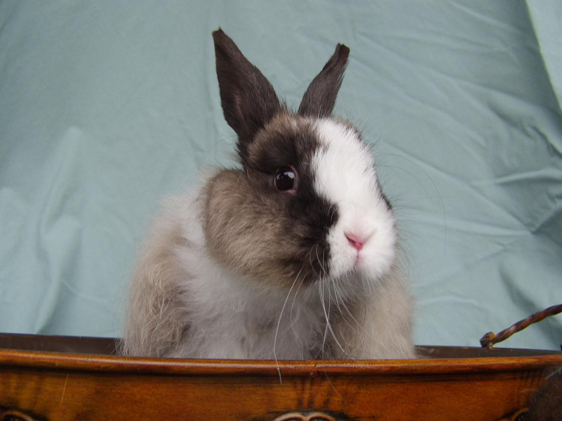 the bunny guy blogs on house rabbits just another wordpress site