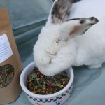 Healthy rabbit treat