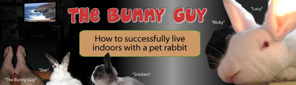 The Bunny Guy Blogs On House Rabbits