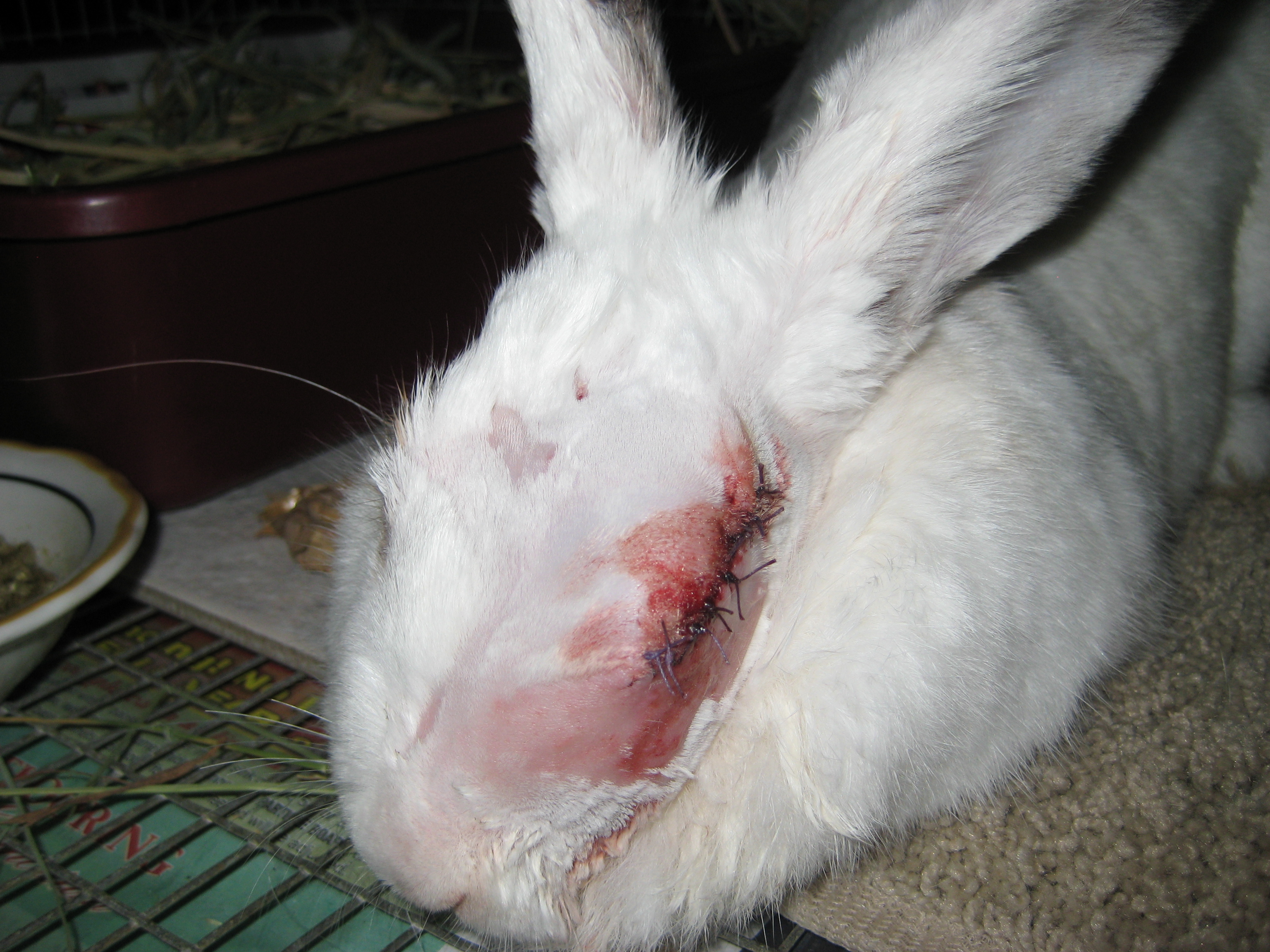 Why Rabbits Should Live Indoors The Bunny Guy Blogs On