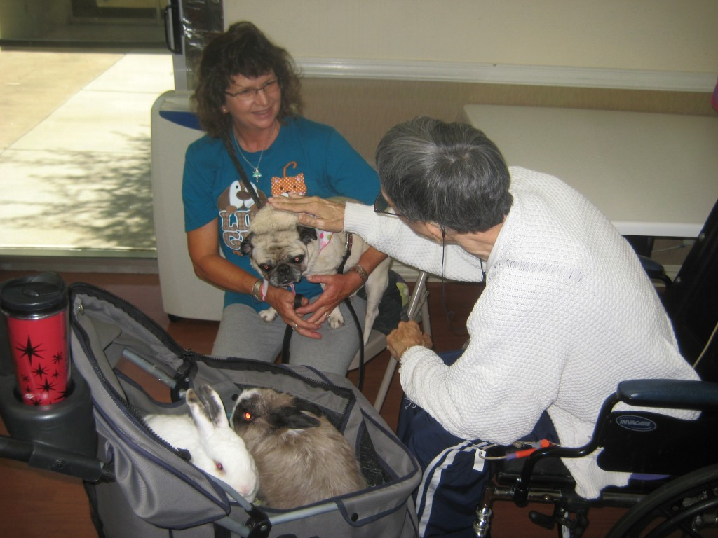 Star and Snickers in their stroller during a therapy session.