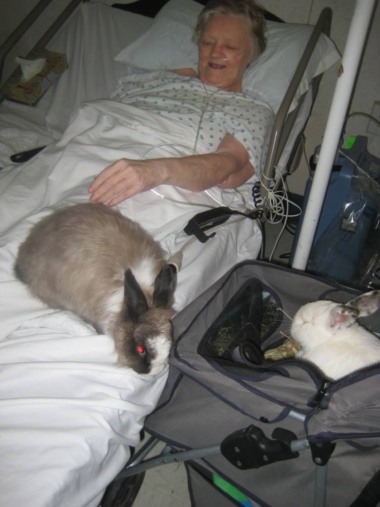 Snickers hopping back and forth entertaining a patient.
