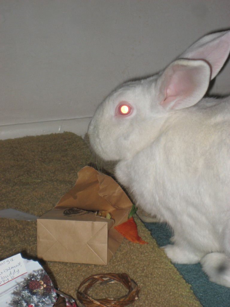 REW Bunny (red eye white)